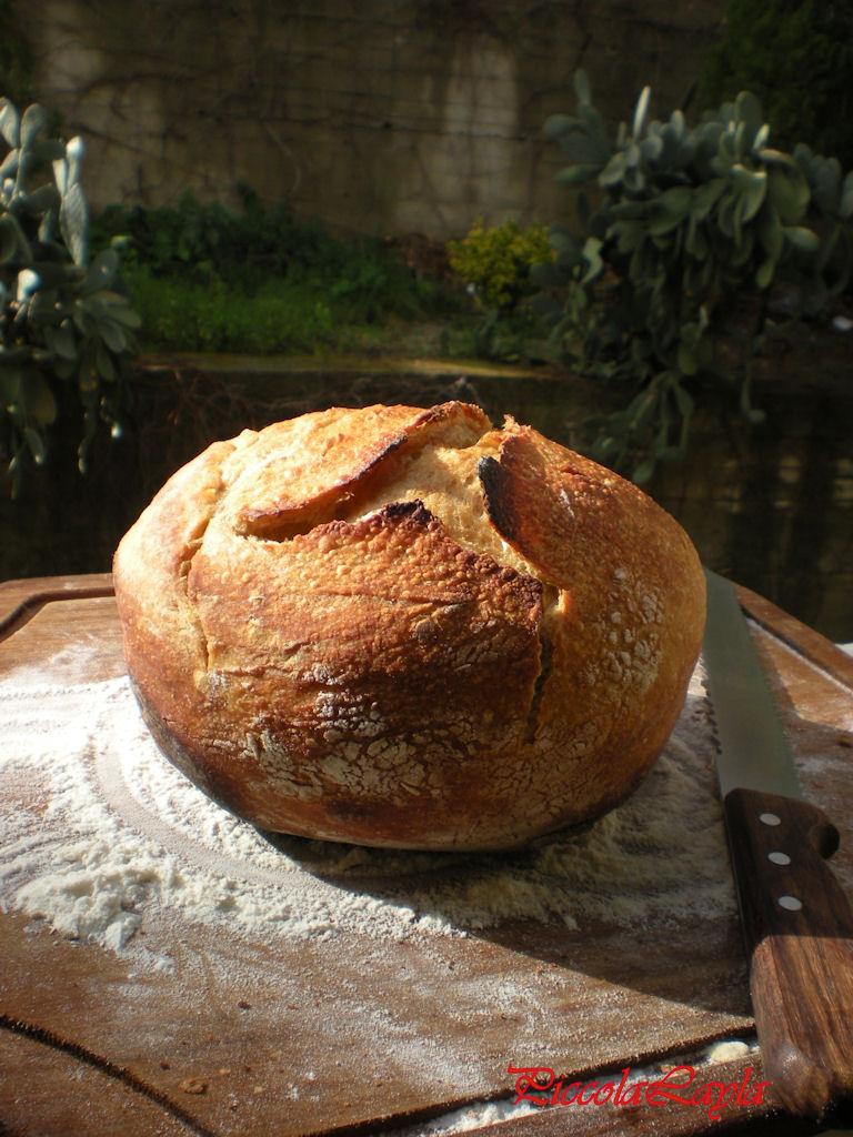 pane senza impasto semintegrale (9)