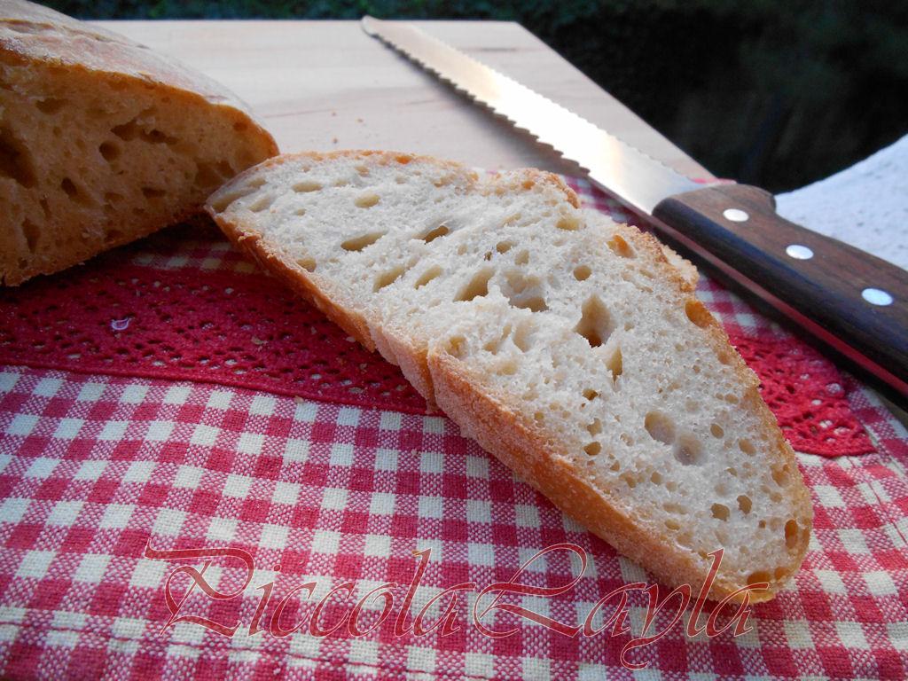 pane pasta madre (23)b
