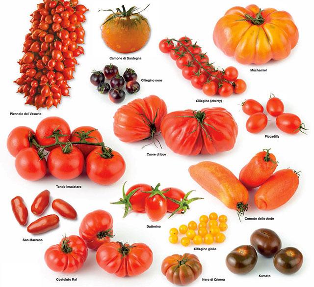 Pomodori profumo di sicilia for Piantare pomodori