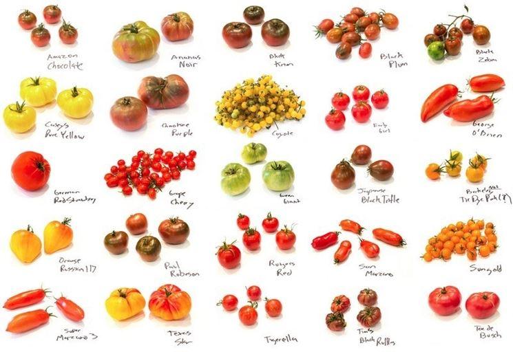raccolta-pomodori_NG3